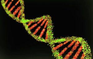Using Y-DNA and mtDNA | | Salt Lake City Utah | Price