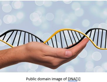 Genetic Genealogy by popular US online genealogists, Price Genealogy: image of a hand holding a double helix.