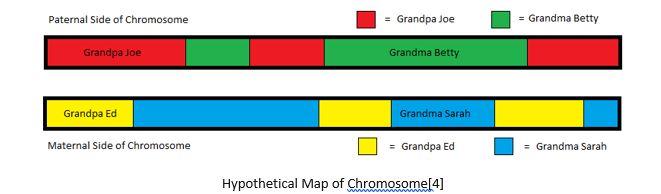 Genetic Genealogy by popular US online genealogists, Price Genealogy: image of a paternal side chromosome and maternal side chromosome.